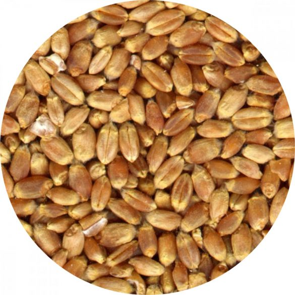 Bio őszi búza főzésre, sütésre, csíráztatásra 50kg