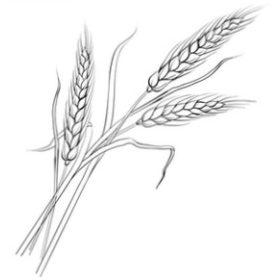Ősi gabona keverék tészták